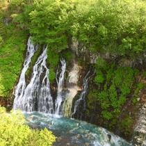 白ひげの滝「6月」