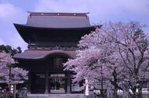 阿蘇神社のさくら