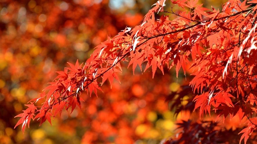 平等寺の約200本のモミジや、西慶寺の巨大ヤマモミジなど、美しい能登の紅葉をご覧ください