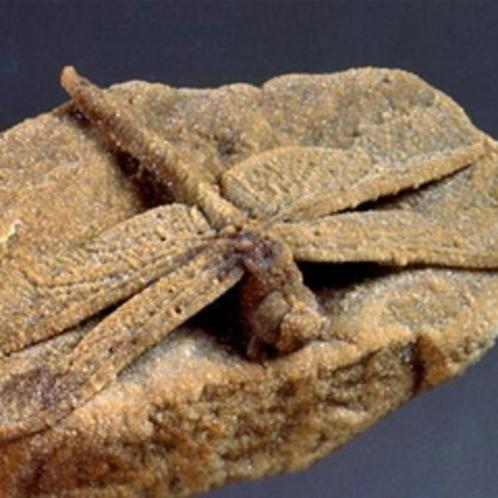 ■奇石博物館(お車で40分) いろんな奇石を展示してます