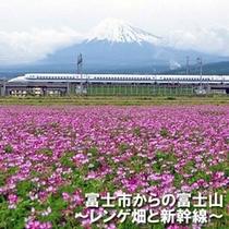 ■富士市からの富士山 東部市民プラザからのレンゲ畑&新幹線(お車で20分)