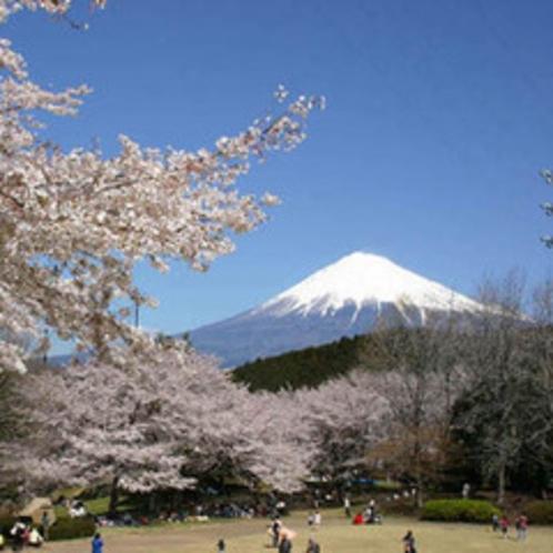 ■岩本山公園(お車で20分) 一面の紅白梅と富士山を撮影できる岩本山公園