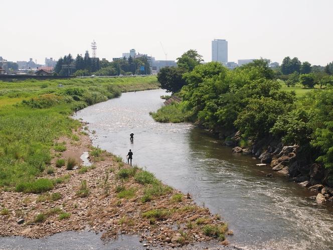 烏川 鮎釣り