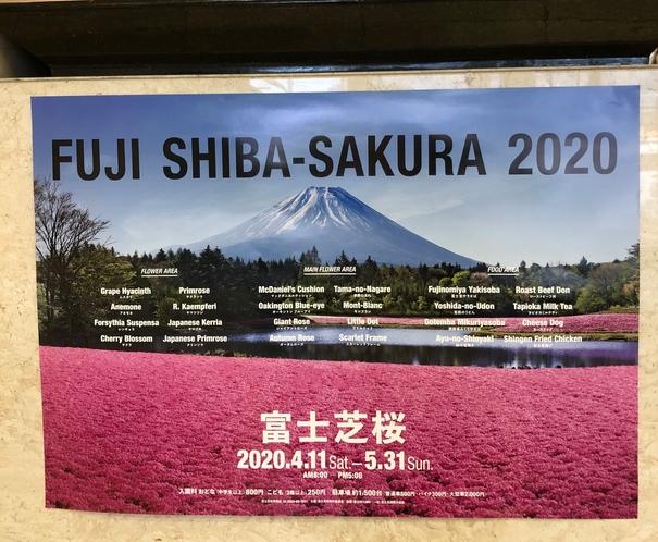 富士芝桜フェスティバル