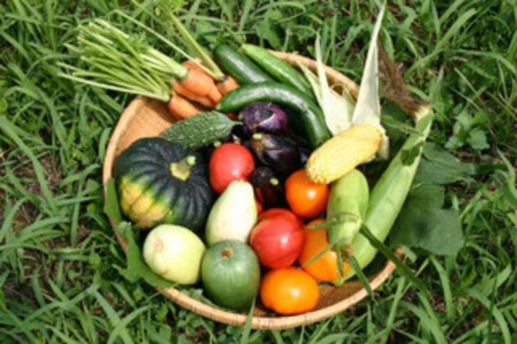 とれとれの夏野菜