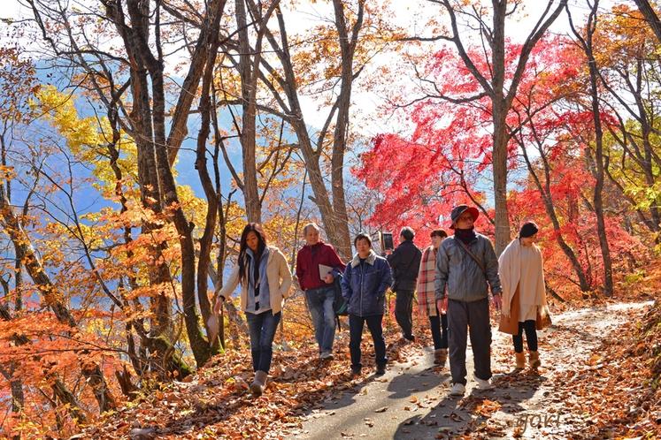 秋のツアー中の風景