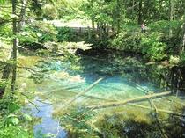 【神の小池】摩周湖の地下水によりできた池