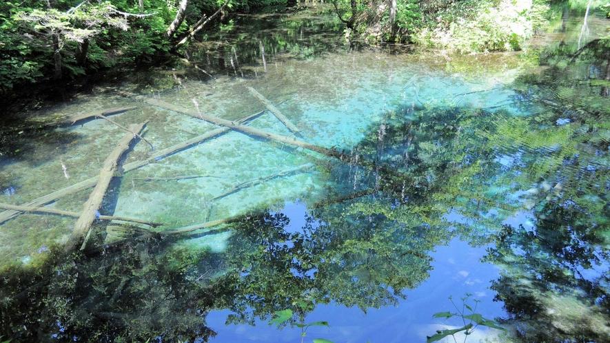 【神の小池】春~秋はコバルトブルー、冬は藍色になります