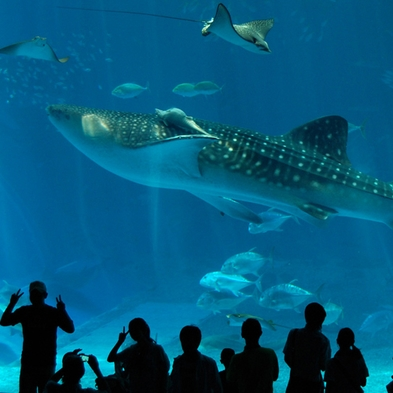 ≪美ら海水族館チケット付≫家族でも、カップルでも 水族館を楽しもう!!(夕朝食付き)