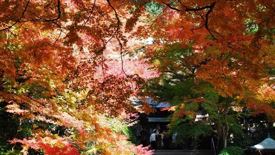【基山町】大興善寺の紅葉