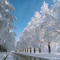 ●冬の画像