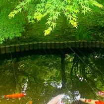 夏の日本庭園「閑雅の庭」