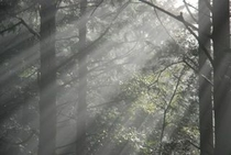 仁淀川町のとある林道内で見た光の帯たち3