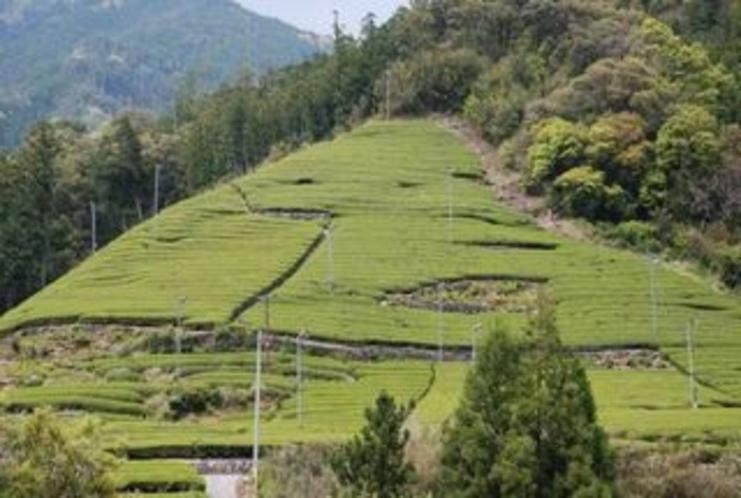 この芸術的な配列の茶畑