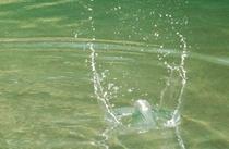 パシンっと弾ける水面