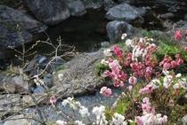 桃の花の国 目の前には渓流が流れてとても気持ちいい場所