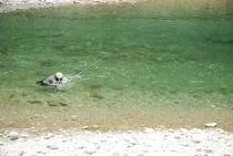 仁淀川支流 土居川の畔 目の前の清流では、アユを掛けている漁師?