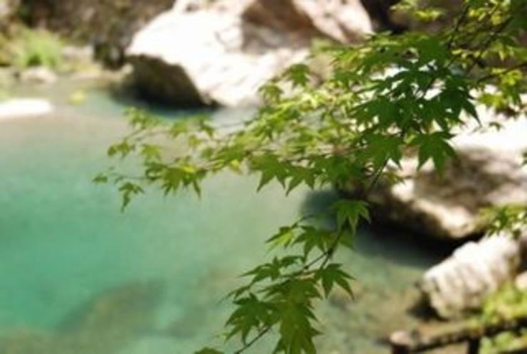 夏の中津渓谷