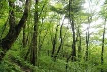 美しき鳥形山の植物たち ゆの森から車で30分以上はかかるでしょうか