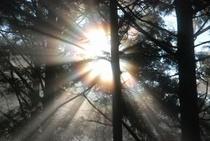 仁淀川町のとある林道内で見た光の帯たち2