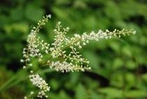 美しき鳥形山の植物たち これはなんだっけ 小さく可憐な花が咲いています