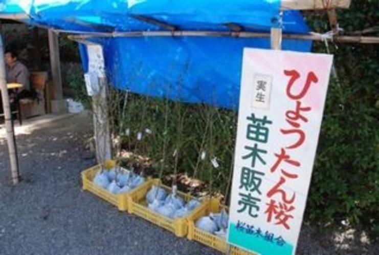 ひょうたん桜のほうでは 苗をしっかり売ってます