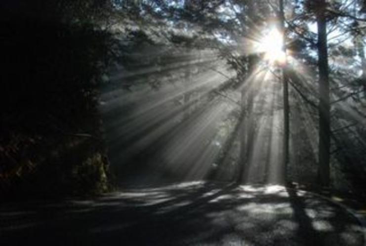 仁淀川町のとある林道内で見た光の帯たち1