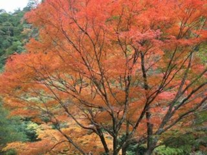 安居渓谷の秋画像7