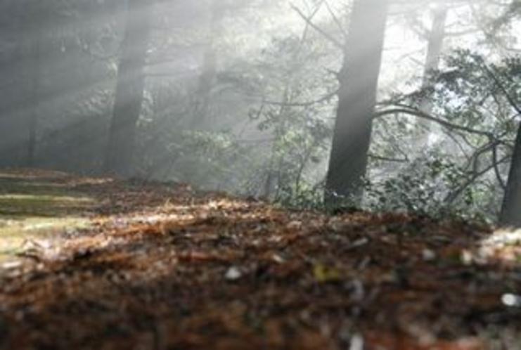 仁淀川町のとある林道内で見た光の帯たち4