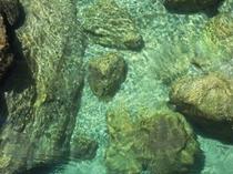 仁淀川支流安居川の水