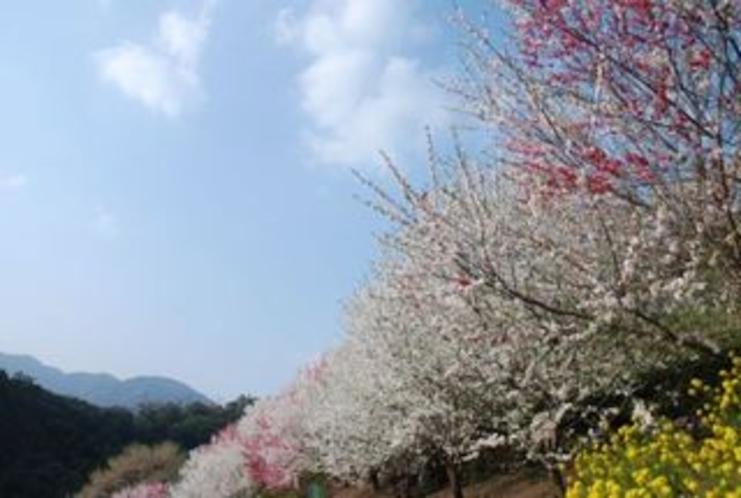 上久喜地区は仁淀川町大崎から車で約10分