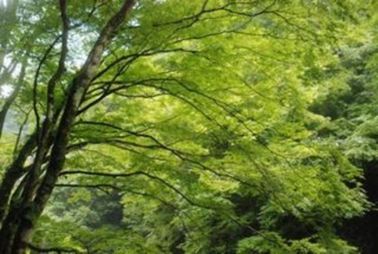 夏の中津渓谷 緑の中で 癒されます