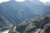 仁淀川のナイスなビューポイント!寺村地区より 西を見ると、斜面に茶畑が