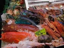 沖縄のお魚さん♪