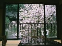 お花見部屋