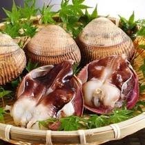 【初夏 料理一例】丹後とり貝。大きさ、肉厚さから日本一ともいわれています