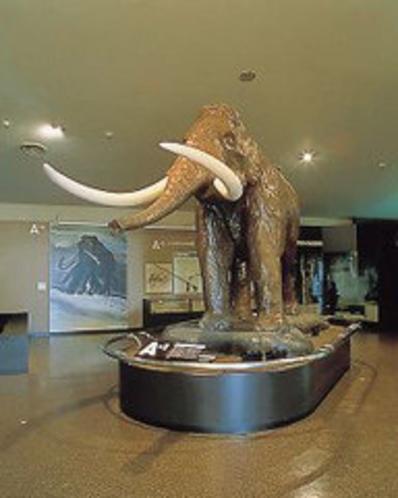 野尻湖ナウマン象博物館
