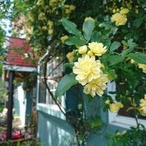 【夏】花々が咲き、緑萌える季節は素敵な雰囲気です