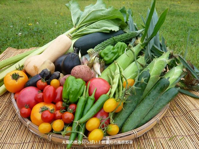 信濃町の夏野菜