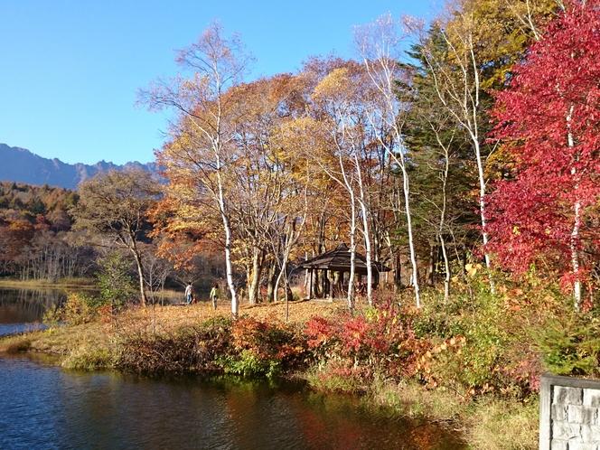 小鳥が池の紅葉