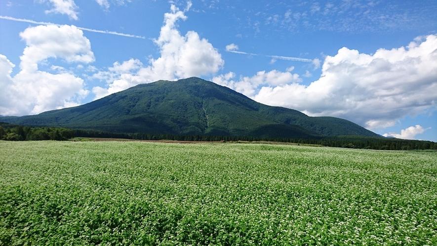 黒姫高原の蕎麦畑