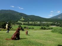 夏の黒姫高原