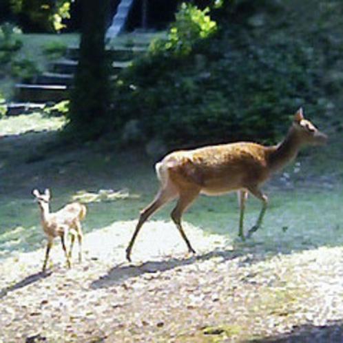 鹿久島の鹿さんたち