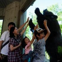 ベアマウンテンでヒグマを観察!
