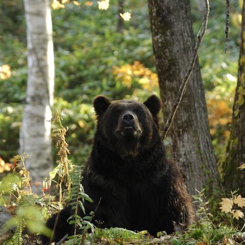 森の中でヒグマを探そう♪