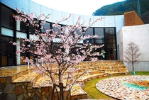 中庭(桜)