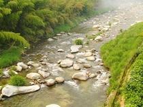 全室嘉瀬川に面し、せせらぎの音や飛び交う鳥の声が心を癒してくれます。
