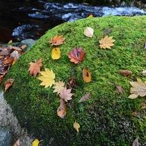 *秋の落ち葉達はまるでアートのよう