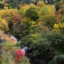 *照葉峡の紅葉も美しく彩ります。