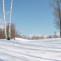 *アクティビティ・スノーシュー/スノーシューで白銀の森林を探検しませんか?澄んだ空気でリフレッシュ♪